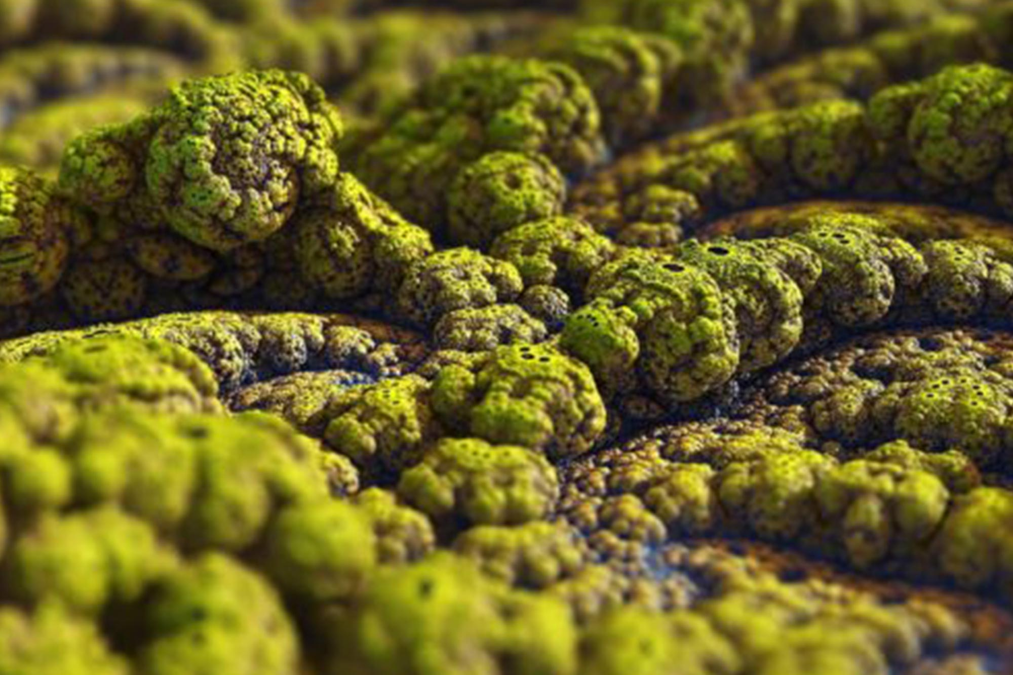 Microscopic View of Mold | Dr. Crawlspace