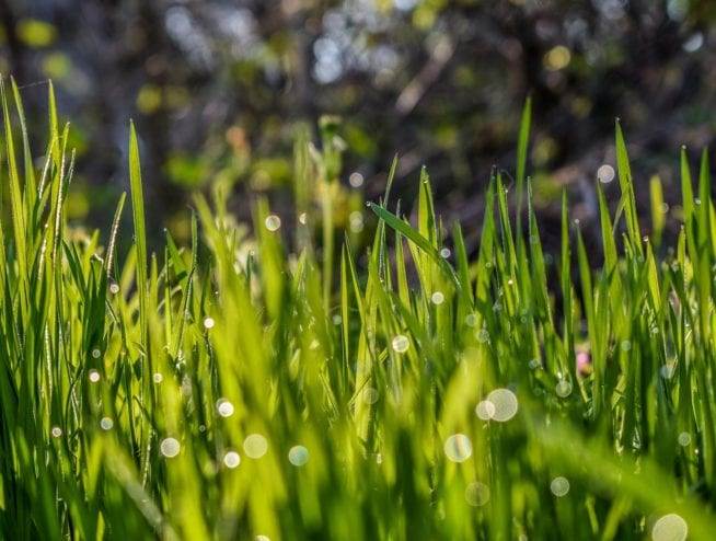 Lush Grass | Dr. Crawlspace